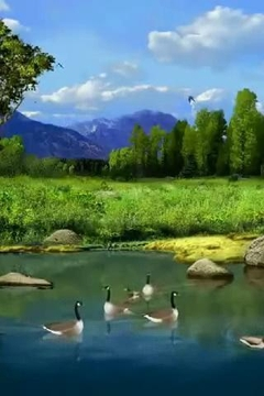 Relaxing Ducks In Pond