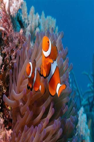 可爱的鱼动态壁纸
