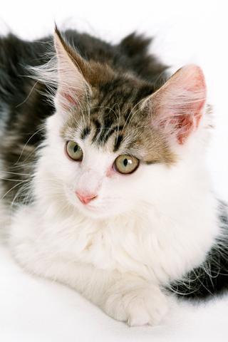 猫咪壁纸下载|猫咪壁纸手机版_最新猫咪壁纸安卓版下载