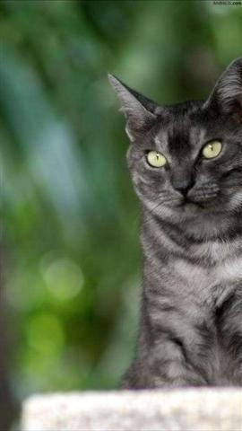 可爱的猫咪墙纸下载
