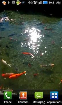 Pond of Fish