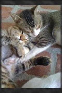 最佳甜貓小貓