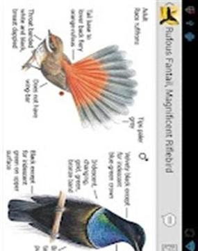 澳大利亚鸟类指南