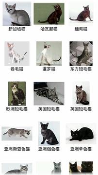 猫猫百科图鉴