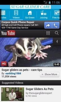 Sugar Glider Care