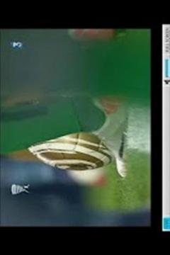 SPORT TV Original