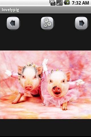 可爱的猪壁纸下载|可爱的猪壁纸手机版