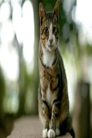 一款精美的可爱的猫主题壁纸软件,通过个性化的动态设置,使