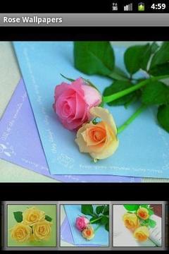 玫瑰花卉Wallpapers3