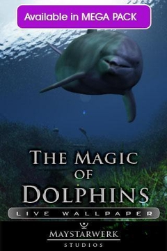 海豚视频铃声