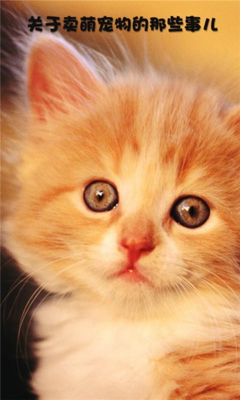宠物的搞笑图片,宠物的逗笑图片,笑声源自生活,快乐就在身边.