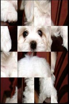 可爱的小狗益智游戏