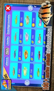 木瓜金鱼 Papaya Fish