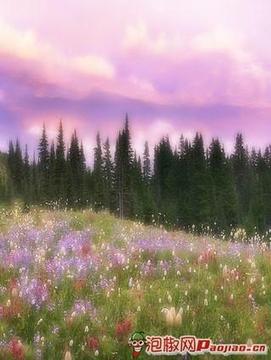 美丽的自然图片