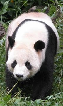 Kiss A Panda