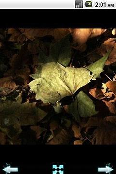 秋季世界摄影