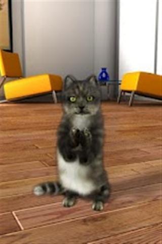 小猫会说话的动物太图片