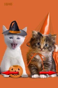 有趣的猫图片2