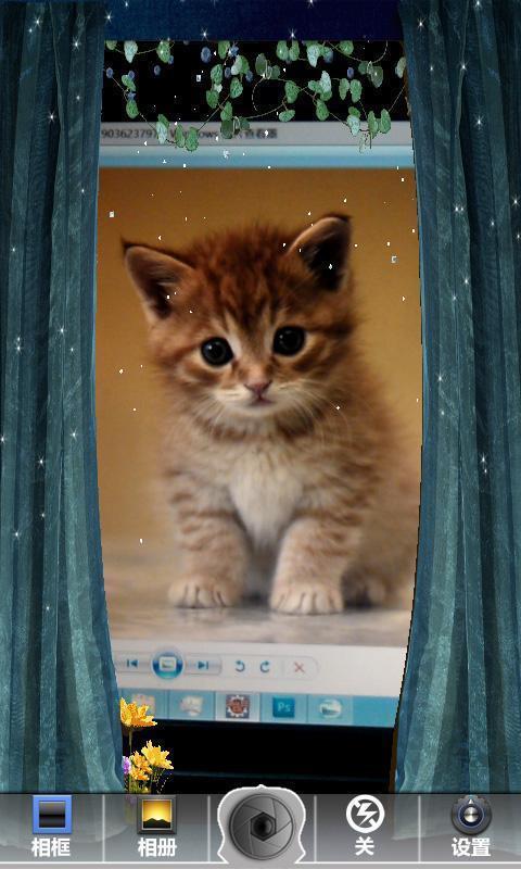 貓咪相框素材免费下载