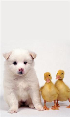 可爱的动物动态壁纸下载