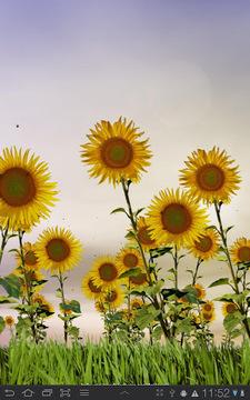 向日葵动态壁纸