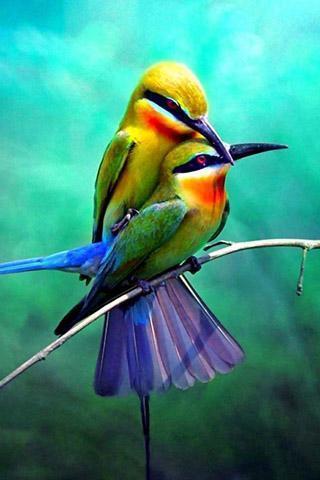 标签:鸟声音,3d鸟的声音,动物的声音,铃声,优美的铃声