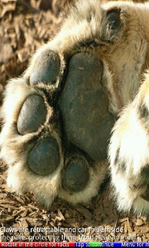 动物的爪子和爪2 free