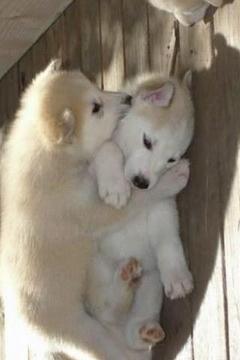 可爱的小狗动物图片