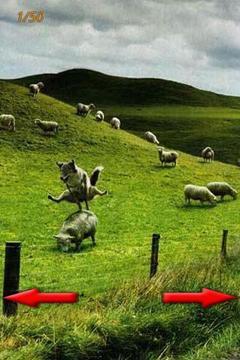 有趣的图片 !!