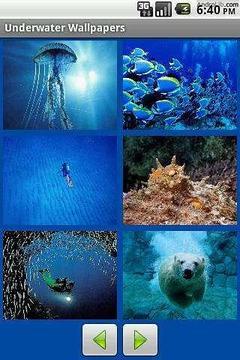 海底世界(墙纸)