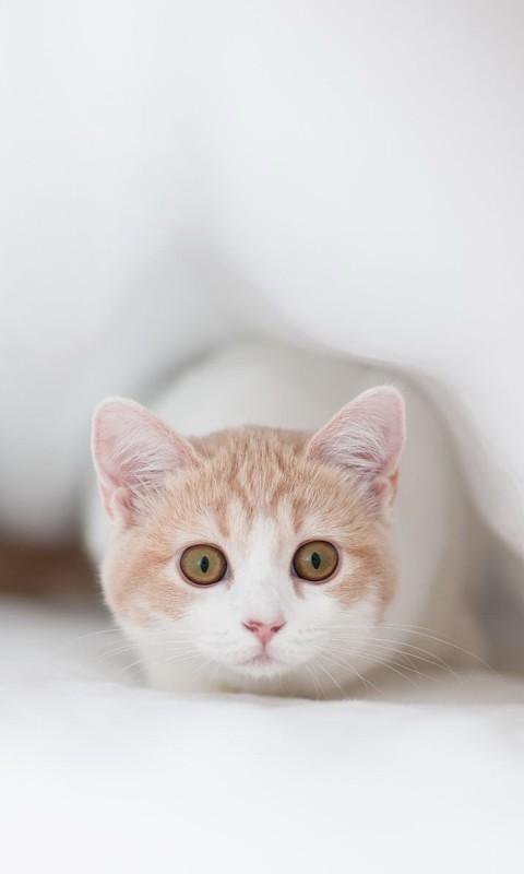 可爱猫猫高清壁纸