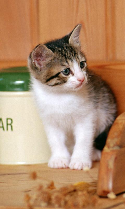 壁纸 动物 猫 猫咪 小猫 桌面 480_800 竖版 竖屏 手机