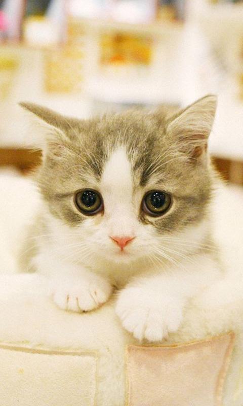 该动态壁纸收集了多张漂亮的可爱猫猫高清壁纸               版本1.