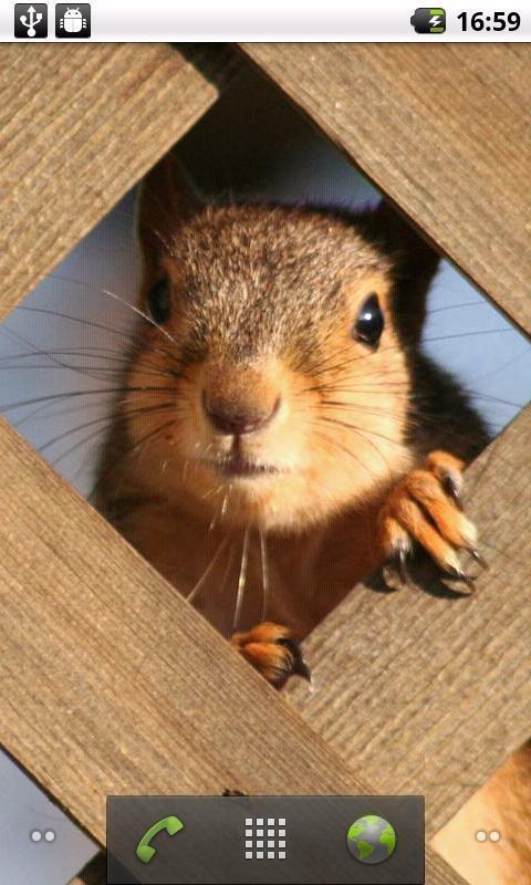 46mb 精选多张非常可爱的松鼠高清动态壁纸, 可爱的松鼠各种萌态, 让