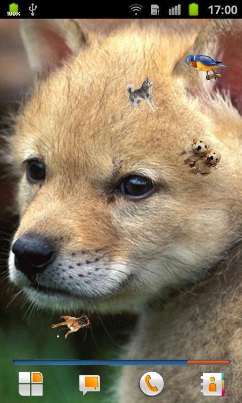 动物动态壁纸下载_动物动态壁纸手机版_最新动物动态