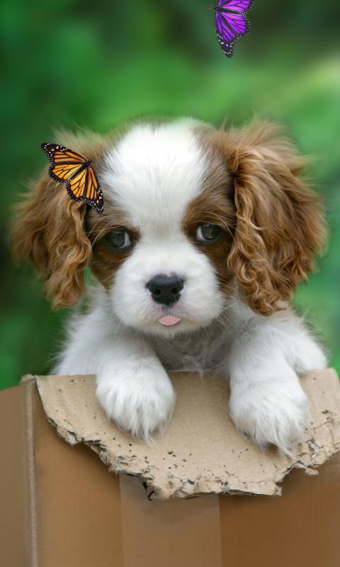 可爱的小狗动态壁纸.