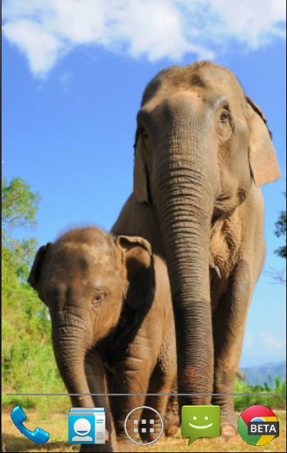 大象动态壁纸下载_大象动态壁纸手机版_最新大象动态