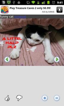 有趣的大聲笑貓