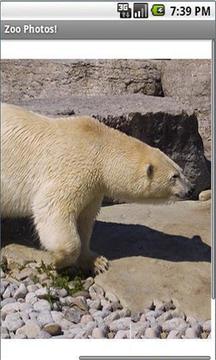动物园照片