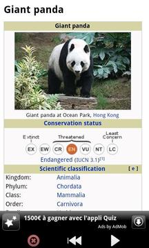有趣的熊猫 Funny Panda
