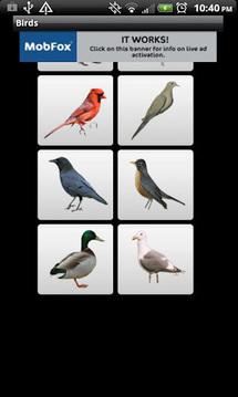 真正的鸟声音
