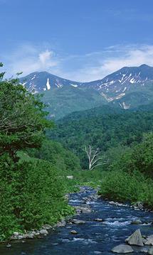 森の中の渓流