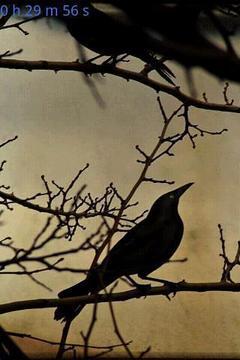 Bird Calls