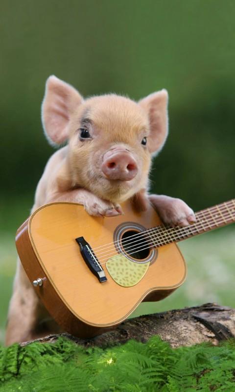 如何设置猪弹吉他,唱活的墙纸在您的手机屏幕:首页 - >应用程序 - >