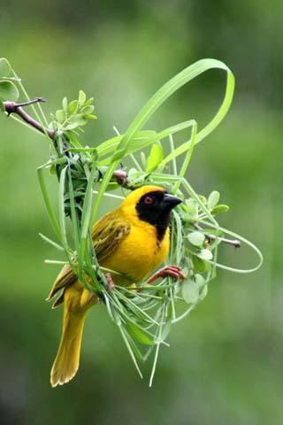标签:鸟的声音,铃声,炫铃,动物的声音,3d鸟叫的声音,有趣的铃声