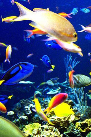 壁纸 动物 海底 海底世界 海洋馆 水族馆 鱼 鱼类 320_480 竖版 竖屏