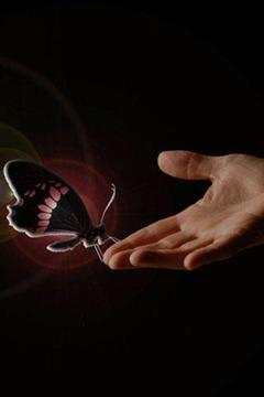 3D Beautiful Butterfly
