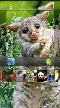 神奇的动物面部图片