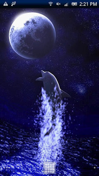 Dolphin Moon Trial