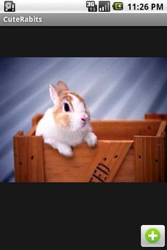 可爱兔兔图集
